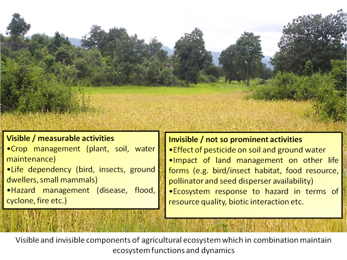 components of agricultural ecosystem