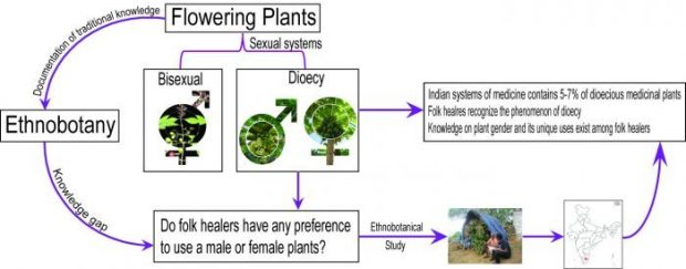 Gender in Plants: do you know male and female plants, and what is your choice while using it for medicine or timber?