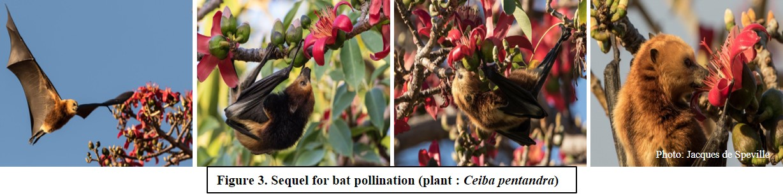 Sequel for bat pollination