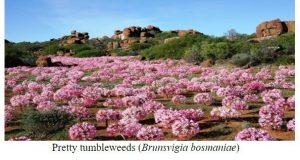 Pretty Tumbleweed