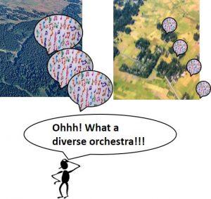 Sound Diversity
