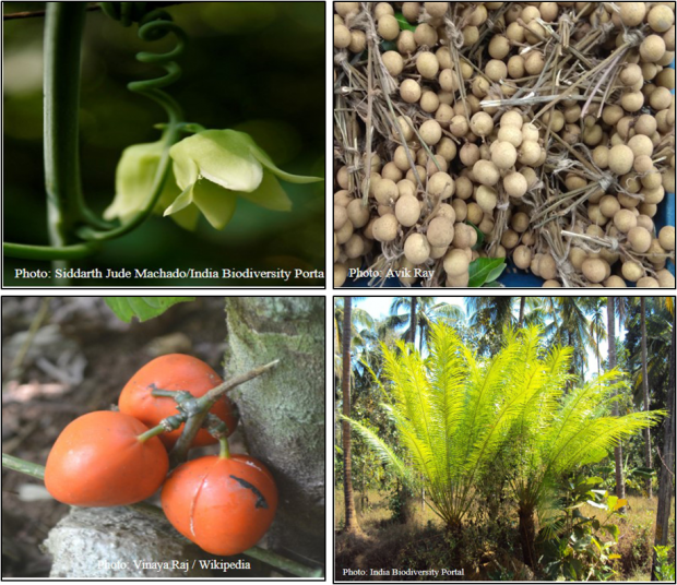 Wild uncultivated edible plants of India