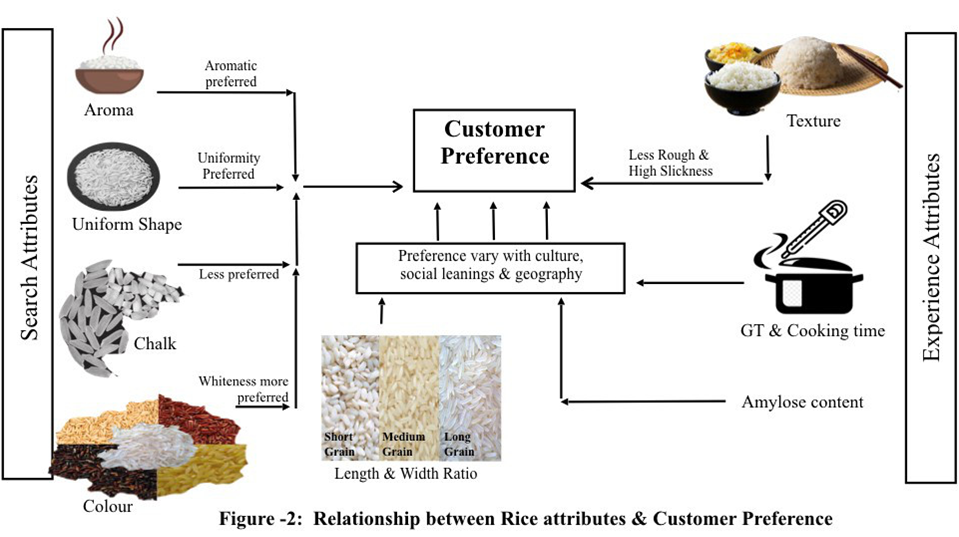 Relationship between rice attributes & consumer preference