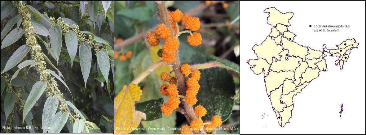 Debregeasia longifolia_wild rhea