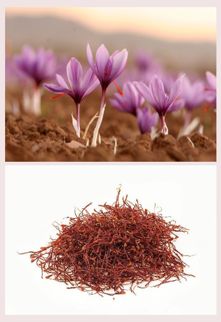 A taste of saffron from Tuscany