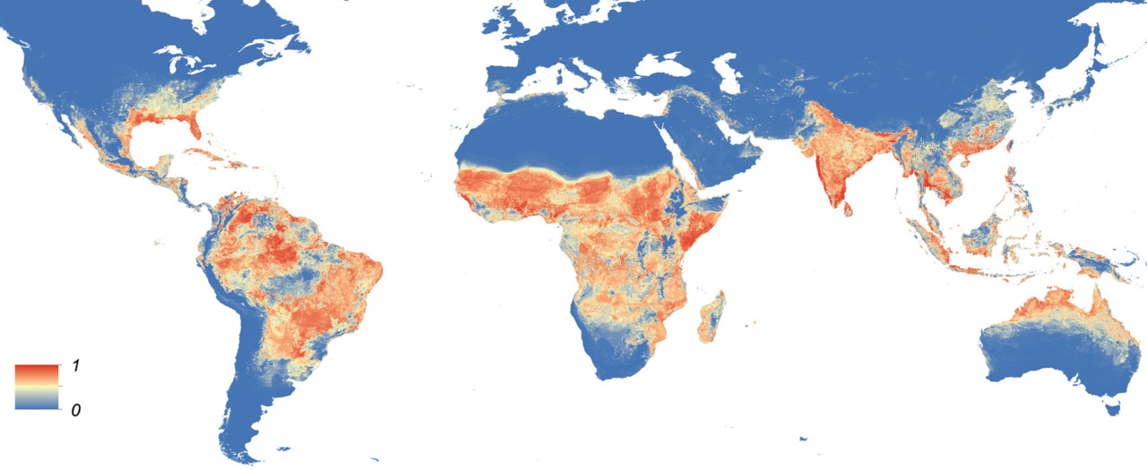 Global Aedes distribution