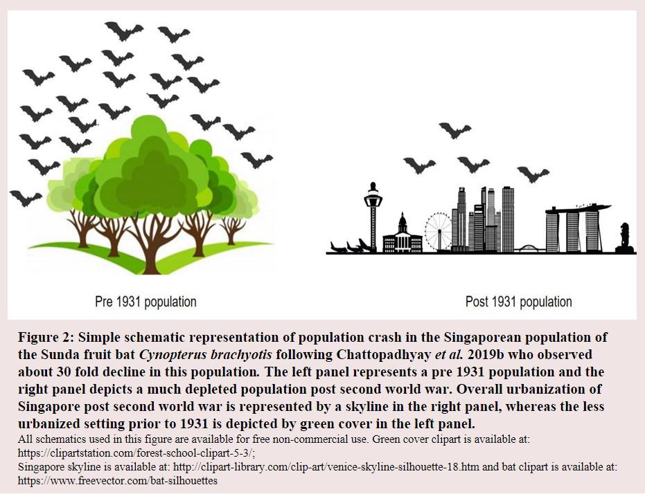 Simple schematic representation of population crash in the Singaporean population of the Sunda fruit Bat
