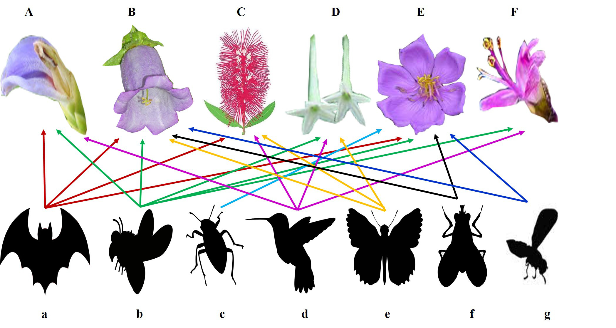 Biodiversity at work a glimpse into the world of Functional Diversity _CEiBa_Vol 3_Issue 1