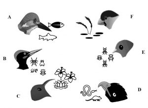 Birds' beaks are modified according to their dietary requirement_CEiBa_Vol 3_Issue 1