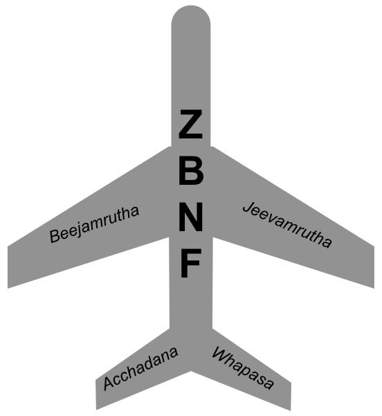 Four pillars of ZNBF_CEiBa