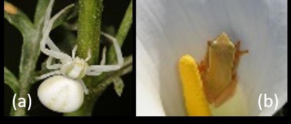 Predators that deter pollinators_CEiBa